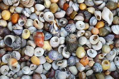 Photograph - Turbinate Monodont Shells Spain by Duncan Usher