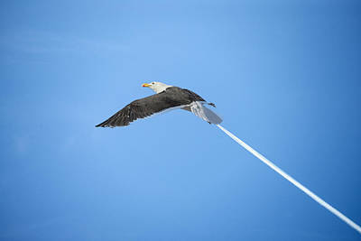 Photograph - Turbo Seagull by Michael Mogensen