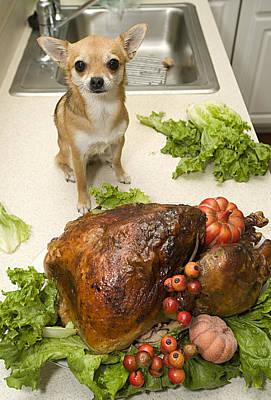 Turkey And Dog Art Print