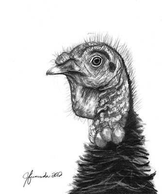 Turkey Bird Art Print