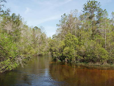 Art Print featuring the photograph Turkey Creek Nature Trail In Niceville Florida by Teresa Schomig