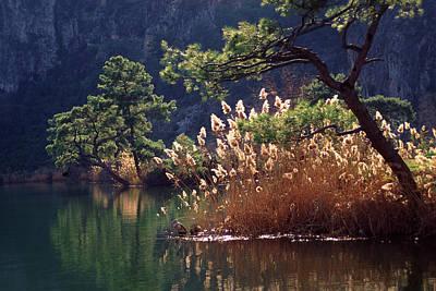 Turkey, Dalyan Scenic Of Pines, Grasses Art Print by Jaynes Gallery