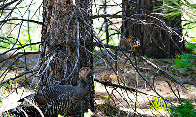 Photograph - Turkey Family  by Brent Dolliver