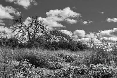 Wild Photograph - Turkey Hill Bw by David Cutts