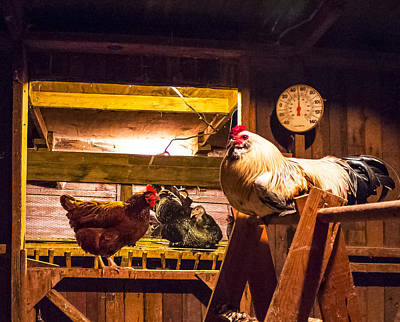 Photograph - Turkey In The Chicken Coop by Wes Jimerson