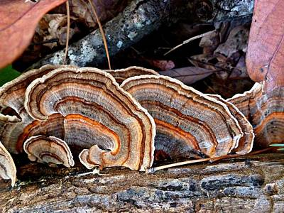 Art Print featuring the photograph Turkey Tail Fungi In Autumn by William Tanneberger