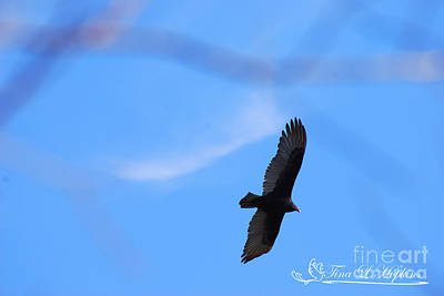 Photograph - Turkey Vulture 20120319_171a by Tina Hopkins