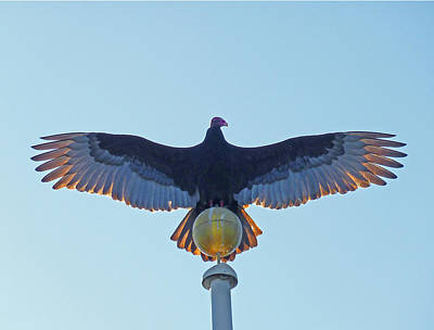 Photograph - Db6347-turkey Vulture  by Ed  Cooper Photography