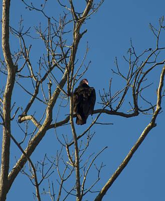 Digital Art - Turkey Vulture In A Tree by Chris Flees
