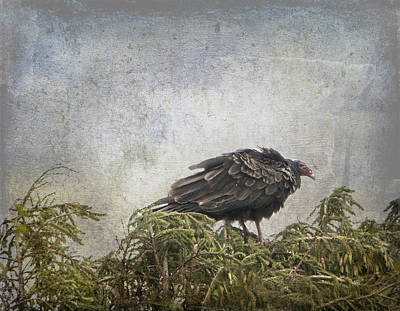 Turkey Vulture Looking For Dinner Art Print