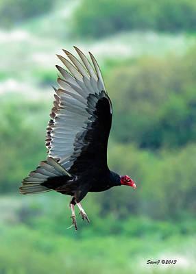 D700 Photograph - Turkey Vulture by Stephen  Johnson