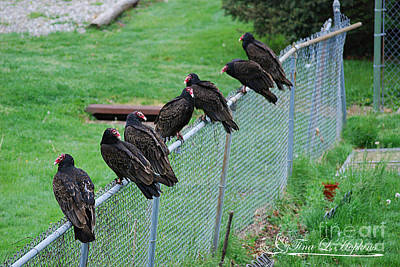 Photograph - Turkey Vultures 20120426_8a by Tina Hopkins
