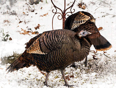 Photograph - Turkeys by Frank Winters