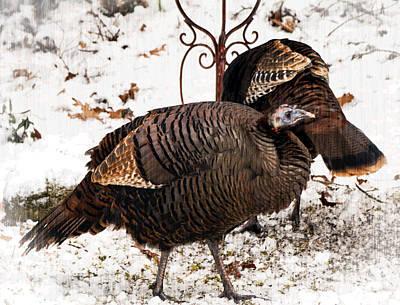 Photograph - Turkeys by Frank Winters