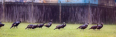 Photograph - Turkeys On Parade  by Robert Culver