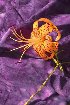 Tiger Lillies Photograph - Turk's-cap Lilly Flower by Keith Webber Jr