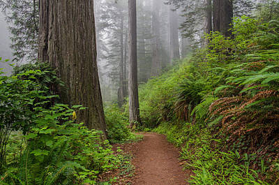 Photograph - Turn Of Redwood Trail by Greg Nyquist