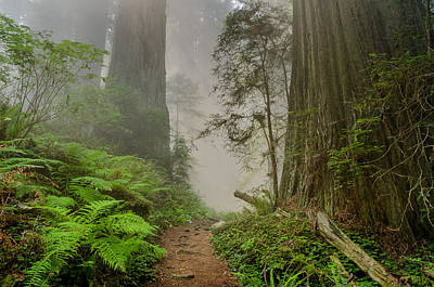 Photograph - Turn Of The Redwood Path by Greg Nyquist