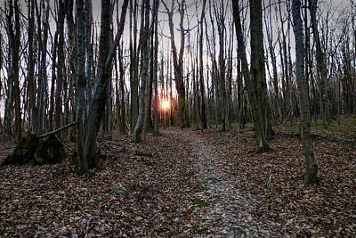 Mystical Forest Photograph - Turn Right At The Setting Winter Sun by Menega Sabidussi