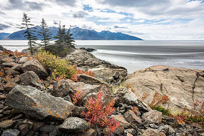 Photograph - Turnagain Autumn by Tim Newton