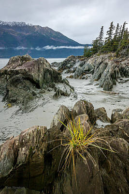 Photograph - Turnagain Tenacity by Tim Newton