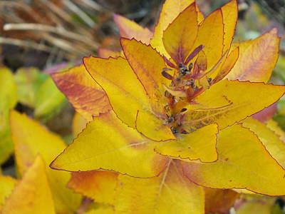 Photograph - Turning Leaves 2 by Gene Cyr