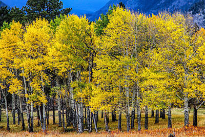 Turning Of The Aspens Art Print
