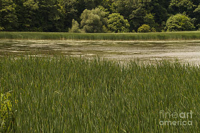Photograph - Turning Point Marsh by William Norton