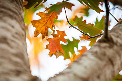 Photograph - Turning To Fall by Melinda Ledsome