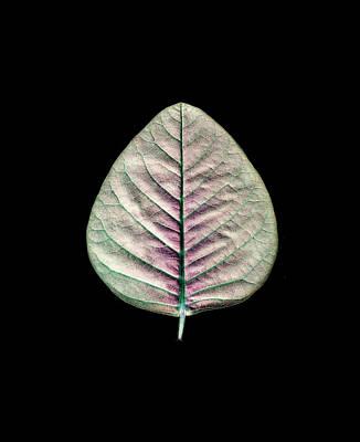 Photograph - Turquoise Leaf by Sumit Mehndiratta
