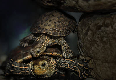 Photograph - Turtels by Amr Miqdadi
