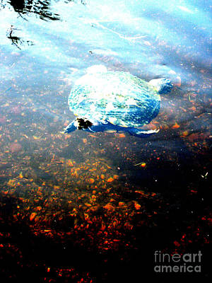 Photograph - Turtle 59 by Oksana Semenchenko