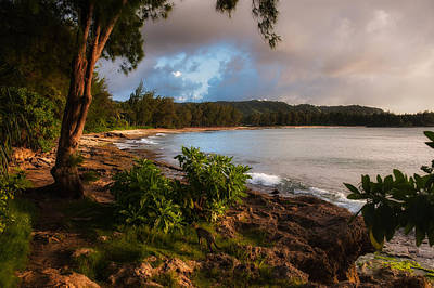 Photograph - Turtle Bay Dusk by Harry Spitz