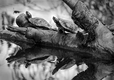 Photograph - Turtle Bffs Bw By Denise Dube by Denise Dube