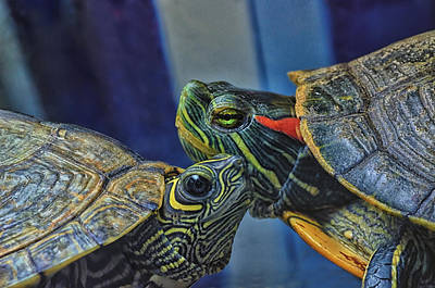 Slider Photograph - Turtle Blues by Susan Capuano