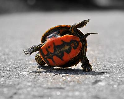 Slider Photograph - Turtle Breakdance   by Mike Quinn