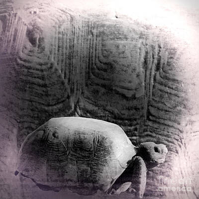 Photograph - Turtle Creation by Megan Dirsa-DuBois