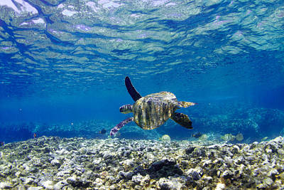 Hawaii Sea Turtle Photograph - Turtle Cruise by Sean Davey