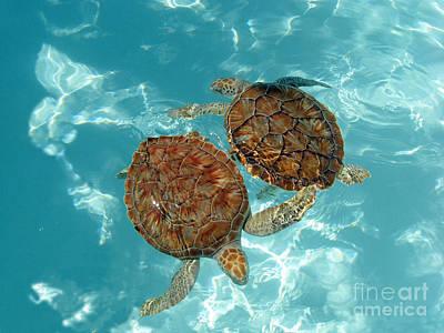 Turtle Dance Art Print by Irina Davis