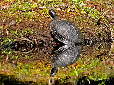 Photograph - Turtle Duet? by Eve Spring