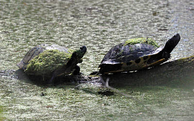 Photograph - Turtle Duo by Kay Lovingood