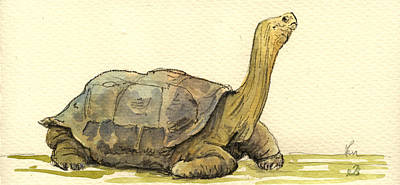 Reptiles Painting - Turtle Galapagos by Juan  Bosco