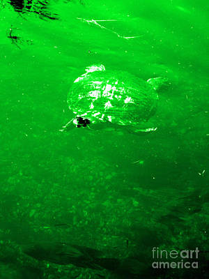 Photograph - Turtle. Green by Oksana Semenchenko