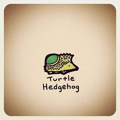 Reptiles Wall Art - Photograph - Turtle Hedgehog by Turtle Wayne