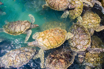 Photograph - Turtle Huddle by Suzanne Luft