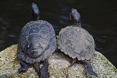 Photograph - Turtle Love by Tikvah's Hope