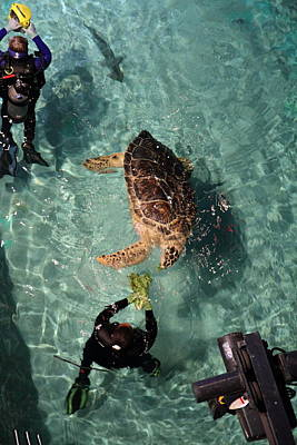 Turtle - National Aquarium In Baltimore Md - 121217 Print by DC Photographer