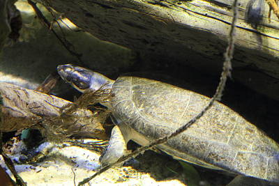 Turtle Photograph - Turtle - National Aquarium In Baltimore Md - 121220 by DC Photographer