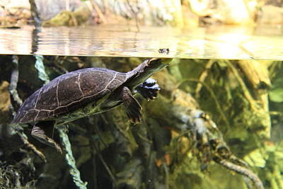 Turtle Photograph - Turtle - National Aquarium In Baltimore Md - 12123 by DC Photographer