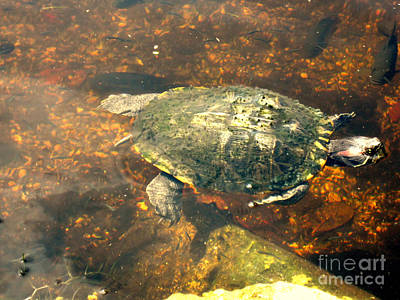 Photograph - Turtle. Nature Collection by Oksana Semenchenko